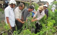 Đào tạo nghề cho nông dân theo hướng linh động, thiết thực